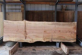"564  Hard Maple Curly Burly -5 10/4 x  41"" x  36"" Wide x  11'  Long"