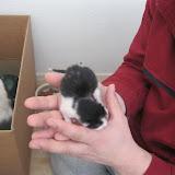 katten - 2011-02-26%2B12-07-36%2B-%2BIMG_0246.JPG