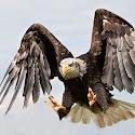 Best wildlife - Attack Mode_Carrie Eva.jpg
