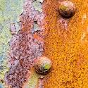 Primary 2nd - Rusty rivets_David Marsden.jpg