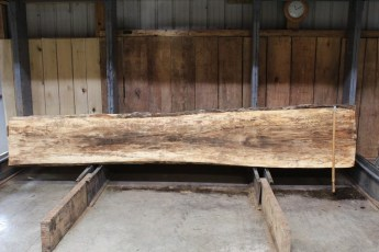 """611 Maple Spalted - 2 10/4x 25"""" x 18"""" Wide x  12'  Long"""