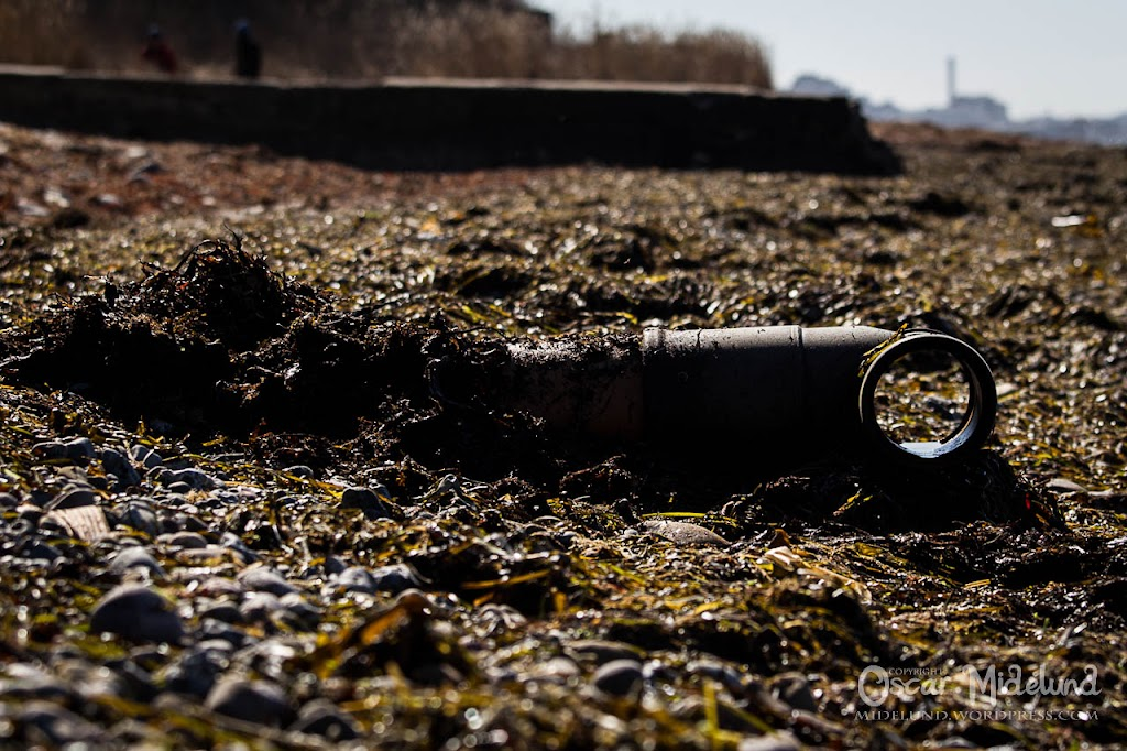 Strandstädning 2013 - IMG_3311.jpg