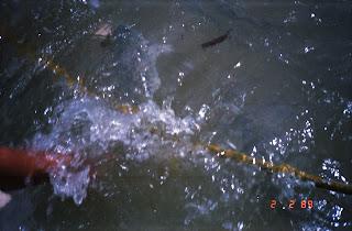 0610Feeding the Fish in Darwin Harbour