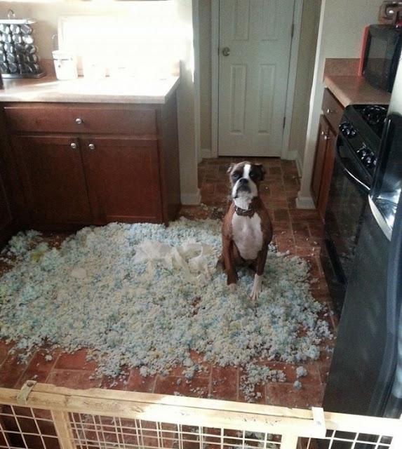 Собака грызет мебель, обувь и провода