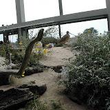 Montery Bay Aquarium, USA - 207779553_a13219f4de.jpg