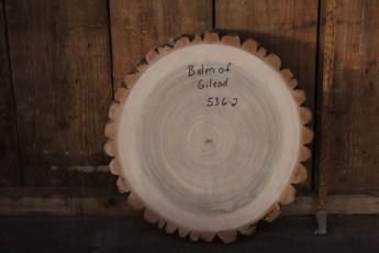 """536 Balm of Gilead -2  2 3/4""""x 24"""" Dia"""