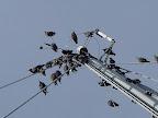 Opgepast, vogels in de mast