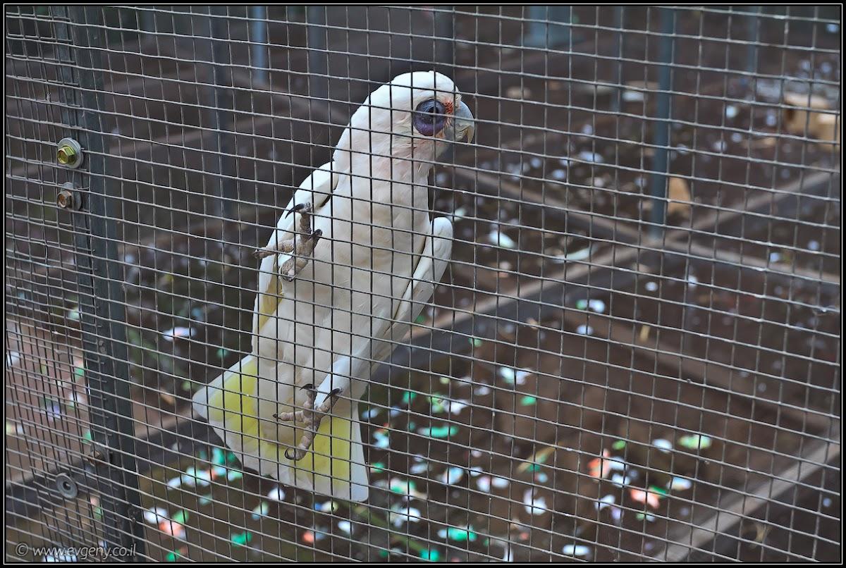Парк Утопия – зоологический   LookAtIsrael.com - Фотографии Израиля и не только...