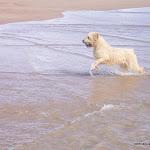 Leon en el mar.jpg