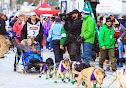Iditarod2015_0148.JPG