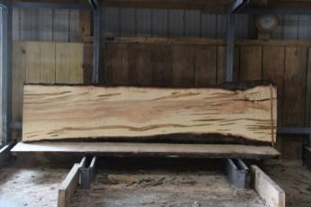 "576  Ambrosia Maple -9 10/4x 29"" x 24"" Wide x  10'  Long"