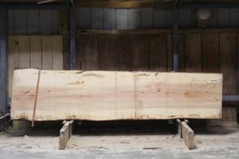 "602  Ambrosia Maple - 5 8/4x 32"" x 27"" Wide x  10'  Long"