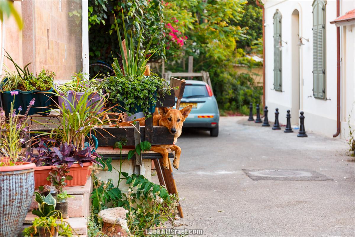 Скучающие пёс в Неве Цедек, Тель-Авив   LookAtIsrael.com - Фото путешествия по Израилю и не только...