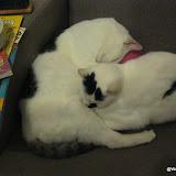katten - 2012-10-05%2B21-42-55%2B-%2BIMG_0968.JPG
