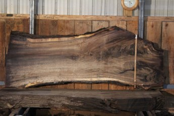 "551  Walnut -6 10/4 x  36"" x  23"" Wide x 8'  Long"