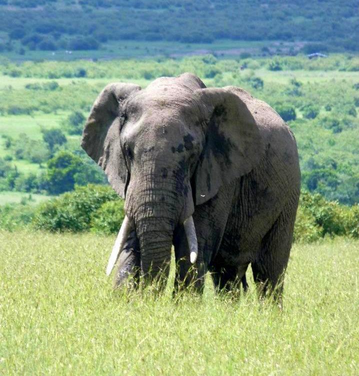 #wildlifesafaritanzania #Travelbloggerindia #Travelblog #Tanzaniatravelblog #tanzaniatourism #Tanzaniawildlifespotting #wildlifesafariafrica