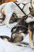 Iditarod2015_0018.JPG