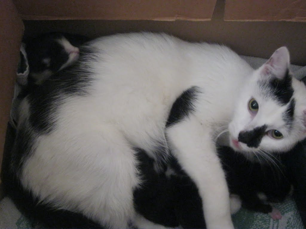 katten - 2011-02-26%2B12-10-54%2B-%2BIMG_0258.JPG