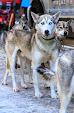 Iditarod2015_0021.JPG