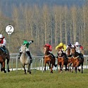 Primary 2nd - Two Furlongs to Go_Max Black.jpg
