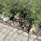 Westhoek Maart 2011 - 2011-03-19%2B11-49-50%2B-%2BDSCF2001.JPG