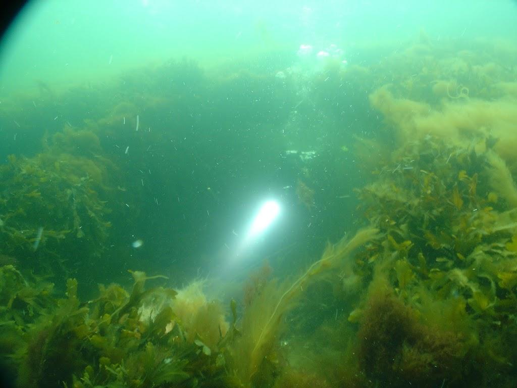 H55 2010-05-16 - DSC03618.JPG