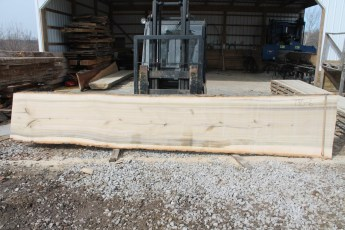 "Tulip Poplar 135-6  2 1/2"" x 34"" - 29"" Wide x 16' Long  Kiln dried"