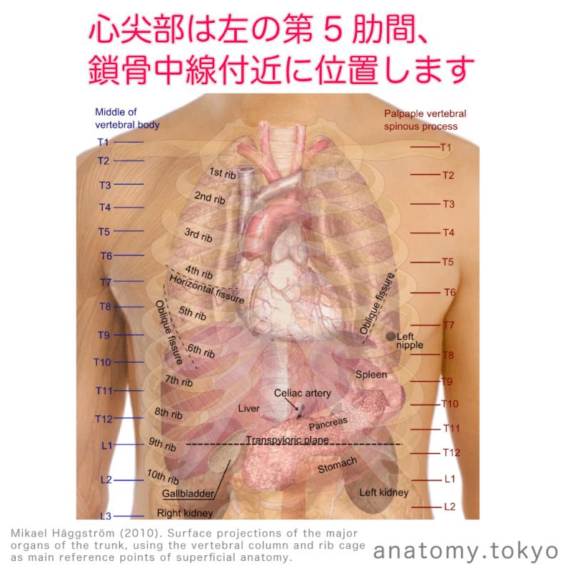 t221-03-心尖部は左第5肋間.png