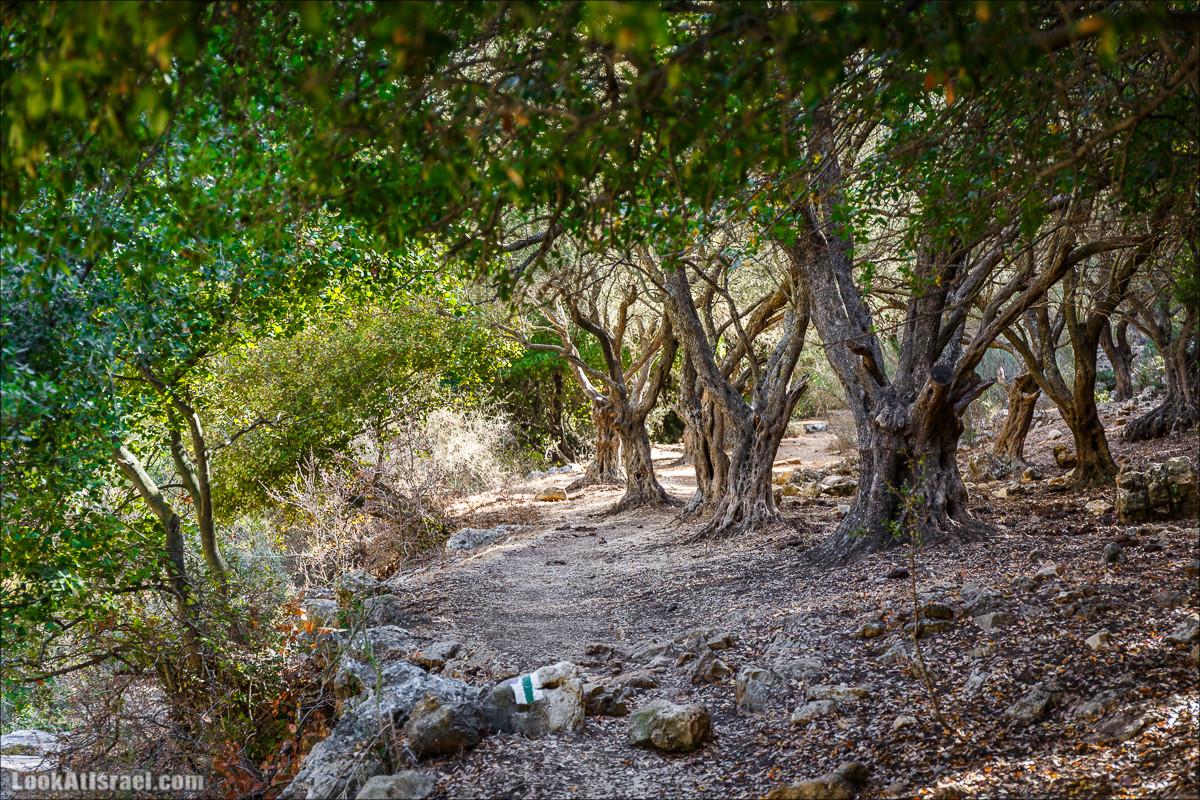 Кто сожрал калину из ручья Калина?
