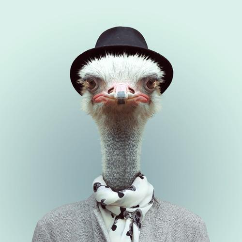*Zoo Portraits動物時尚秀:正經八百時裝篇! 12