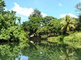 леса на вануату