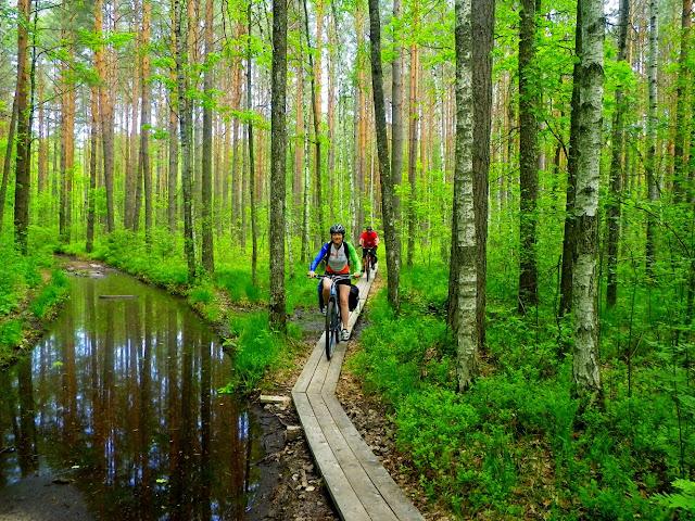 дерев'яні доріжки по лісу
