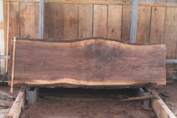 "556  Walnut -2 10/4 x  30"" x  27"" Wide x 8'  Long"