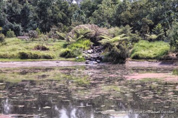 Cascada, humedal Zasqua