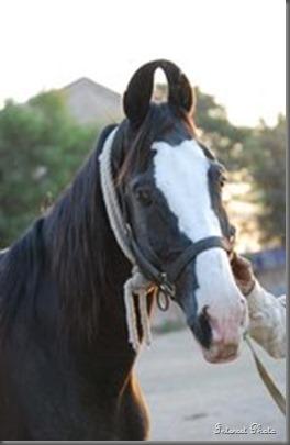 Humayun_horse