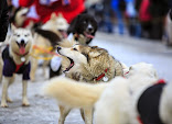 Iditarod2015_0143.JPG