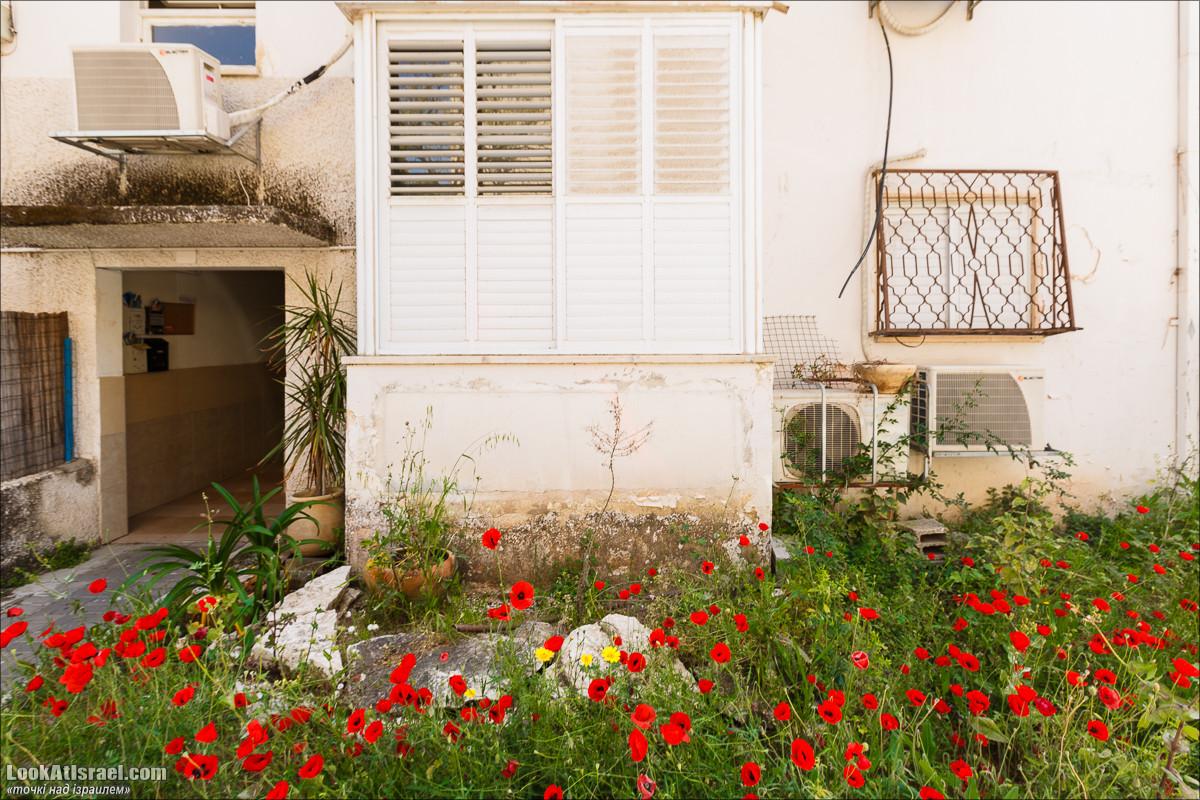 Серия рассказов о городах Израиля «Точки над i» - Кфар Сава (Кфар Саба) | LookAtIsrael.com - Фото путешествия по Израилю