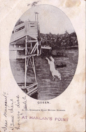 postcard-toronto-island-hanlans-point-high-diving-horse-queen