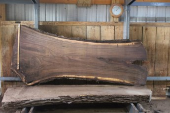 "555  Walnut -7 8/4 x  44"" x  29"" Wide x 8'  Long"