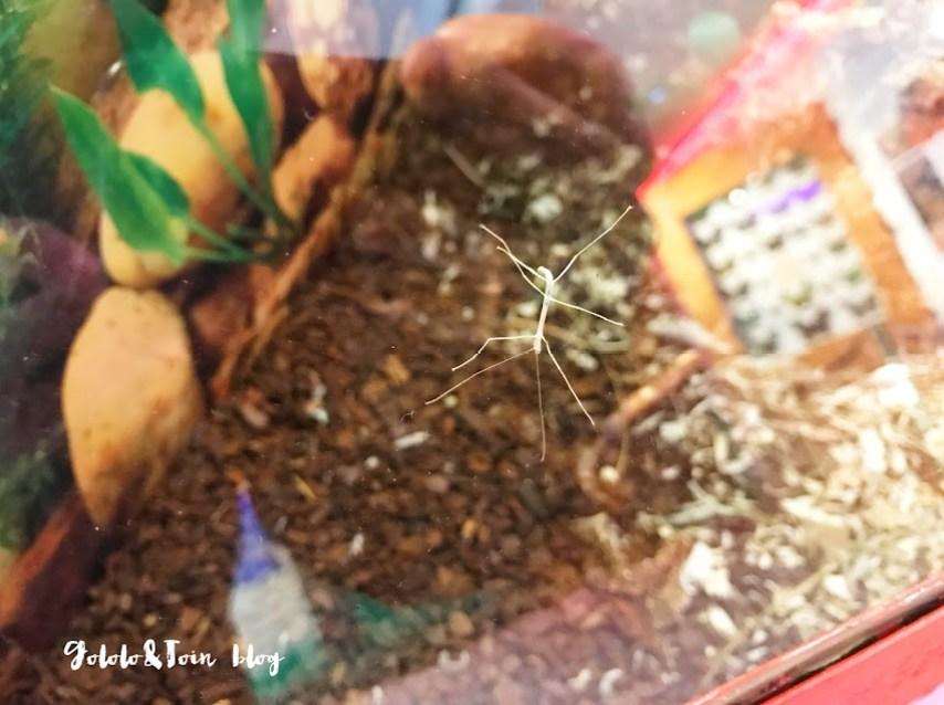 insectpark-insectos-centro-naturaleza-ocio-con-niños