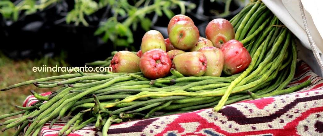 Jambu Organik dan Kacang Panjang