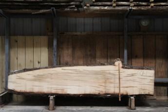 "601  Ambrosia Maple - 1 8/4x 30"" x 14"" Wide x  10'  Long"