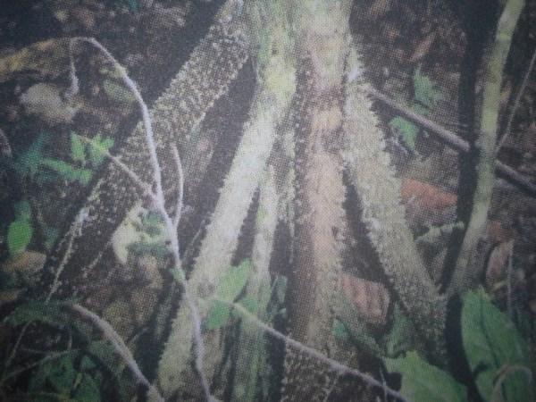 Morphology Of Monocotyledonous And Dicotyledonous Plants