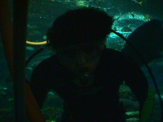 1160Dog Shark