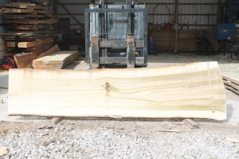 "133 - 4 Poplar 2 1/4"" x 39"" - 30"" Wide x 12' Long  Kiln dried"