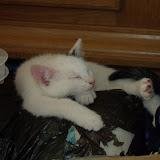 katten - 2010-07-04%2B17-12-09%2B-%2BDSCF1359.JPG