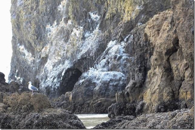 Domesticability Oregon Trip Mt. St Helens Haystack Rock Tidepools_-356