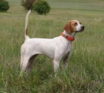 Зачем собаке хвост википедия