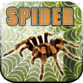 /APK_Impossible-Spider-Wars_PC,52708834.html