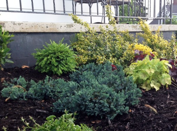 perennial garden plan evergreen